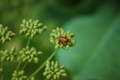 Ladybird. Bright ladybird decoration for plants Stock Image