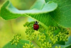Ladybird. Bright ladybird decoration for plants Royalty Free Stock Photos