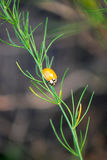 Ladybird. Bright ladybird decoration for plants Royalty Free Stock Photography