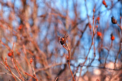 Ladybird bug sitting on the tree branch in the sunset forest. Stock Photos