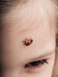 Ladybird bug walking across forehead of a girl. With downwards angle Stock Photo