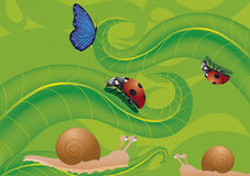 Ladybird butterfly and snails. Ladybird, snail, animated nature, butterfly , nature, green, red, insect, macro, multicolored, seven spot ladybird, flying Royalty Free Stock Images