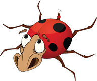 Ladybird. Cartoon Royalty Free Stock Photography