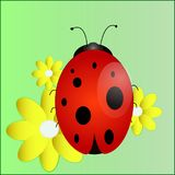 A ladybird, a cartoon character, an insect,. Bright ladybug in a good cartoon style on the flowers of chamomile in a green field Royalty Free Stock Images