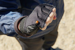 Ladybird chłopiec dalej rękę gloved ręka cyklista Fotografia Royalty Free