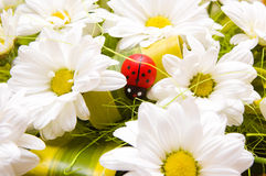 Ladybird and chamomiles royalty free stock photography