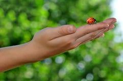 Ladybird on children's hands Stock Photos