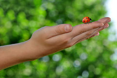 Ladybird on children's hands Royalty Free Stock Photos