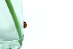 Ladybird climbing up. Royalty Free Stock Photos