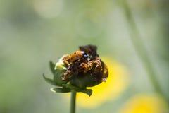 Ladybird, coccinelle images libres de droits
