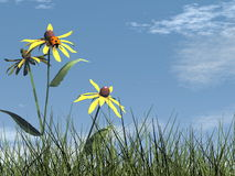 Ladybird - 3D render Royalty Free Stock Image