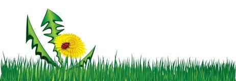 Ladybird on Dandelion in the grass Stock Photo