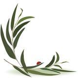 Ladybird and eucalyptus Stock Photo