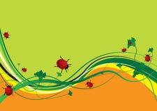 Ladybird field Stock Images