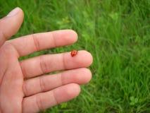 Ladybird on finger Royalty Free Stock Image