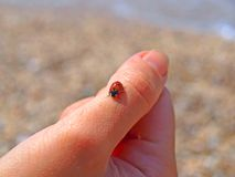 Ladybird on the finger Stock Images