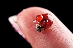 Ladybird on finger Royalty Free Stock Photos
