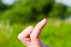 Ladybird  on the  finger Royalty Free Stock Photo