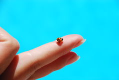 Ladybird on finger Royalty Free Stock Image