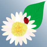 Ladybird flower & leaf vector. Little ladybird in petal of a daisy with a leaf. Vector Stock Images