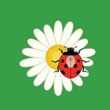 ladybird on a flower, vector  Stock Image