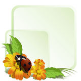 Ladybird and flowers    Royalty Free Stock Photos