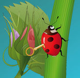 Ladybird and flowers. Toy vibrant plant rose Royalty Free Stock Image