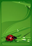 Ladybird_frame Royalty Free Stock Photography