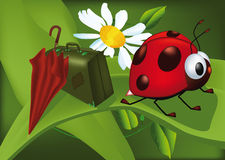 Ladybird goes to holiday Royalty Free Stock Photos