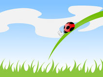 Ladybird on a grass Stock Photos