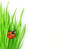 Ladybird in grass Stock Images