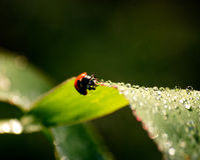 Ladybird on grass. Fresh morning dew and little ladybird on grass Stock Photography