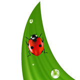 Ladybird On Grass. Vector Stock Photo