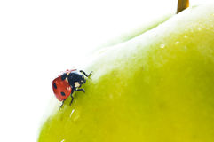 Ladybird on green apple Stock Photography