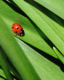 Ladybird on a green leaf Stock Photos