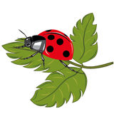 Ladybird on the green leaf Stock Image