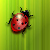 Ladybird on green leaf. Stock Images
