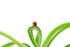 Ladybird on the green shoots Royalty Free Stock Photo