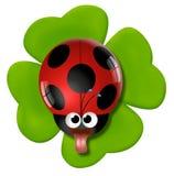Smelly ladybird on the four-leaf clover. vector illustration