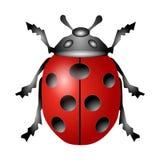 Ladybird ha isolato Fotografia Stock Libera da Diritti