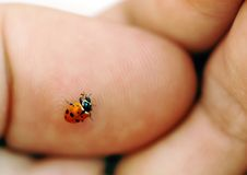 Ladybird on hand Stock Image