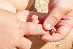 Ladybird on hand boy Royalty Free Stock Photos