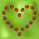 Ladybird heart Royalty Free Stock Photos