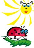 The ladybird is heated on the sun Stock Photos