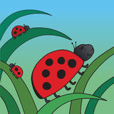 Ladybird and her family Royalty Free Stock Photos