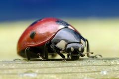 Ladybird at high magnification Stock Photos