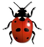 Ladybird Illustration Royalty Free Stock Images