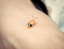 Ladybird insect feces on the skin Royalty Free Stock Photo