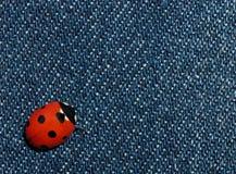 Ladybird on jeans royalty free stock photo