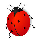 Ladybird. Royalty Free Stock Photo